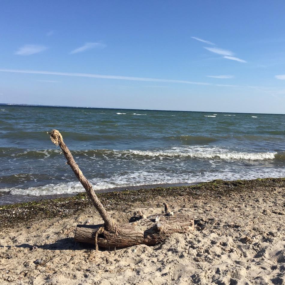 Treibgut am Strand