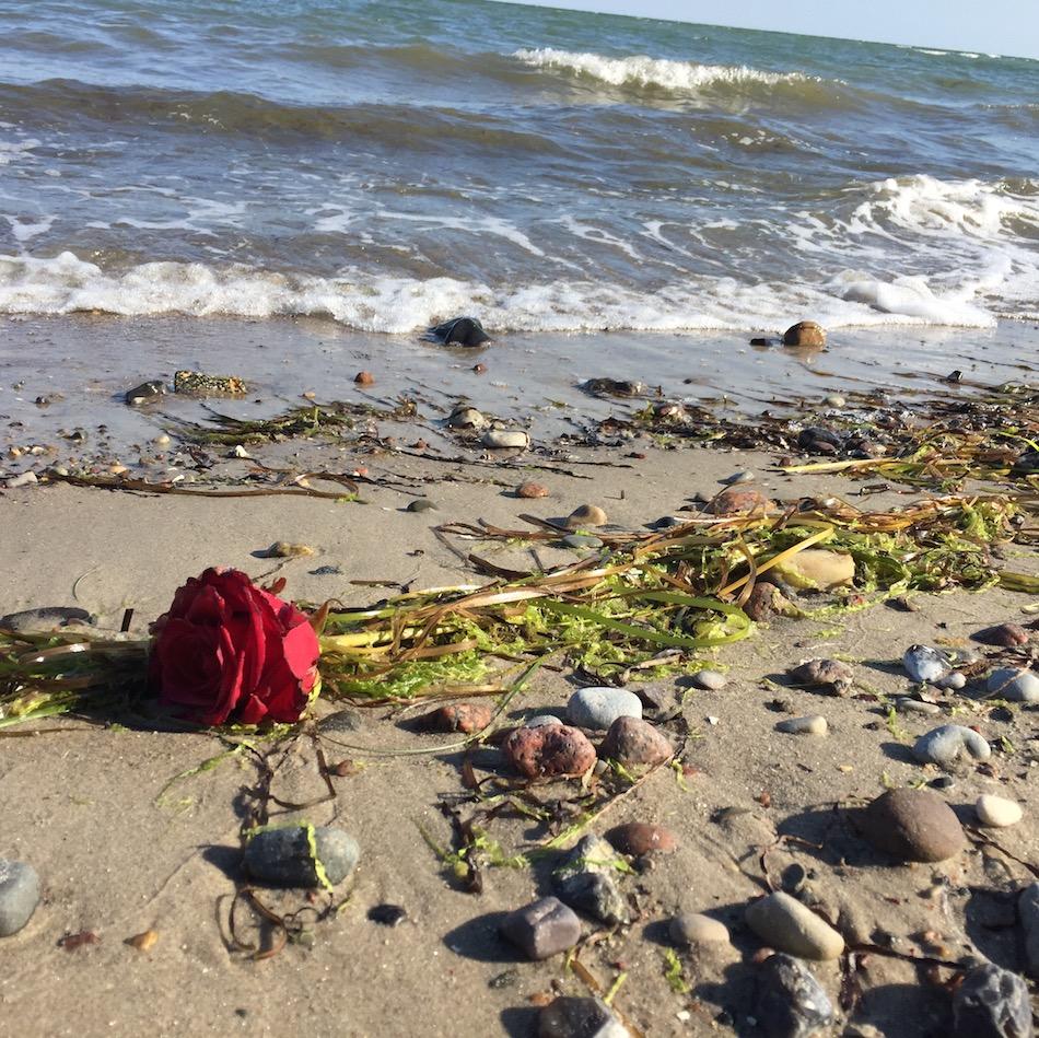 Muscheln, Sand, Findlinge und eine Rose die Geschichten erzählen